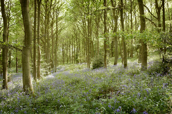 How to enjoy spring in Yorkshire